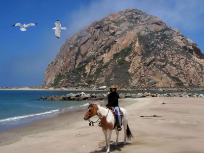Morro Bay Horse Back Riding At Morro Rock